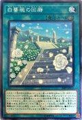 白薔薇の回廊/ノーマル(20PP-JP011)【魔法】