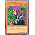 黒き森のウィッチ/ノーマル(ST19-JP016)【モンスター】